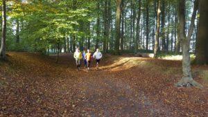 Après 1 km dans le bois