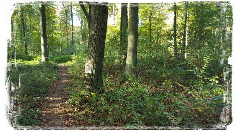 Un sentier du bois