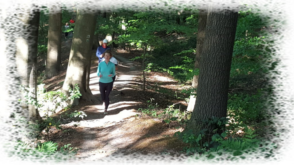 HAC sentier dans le bois
